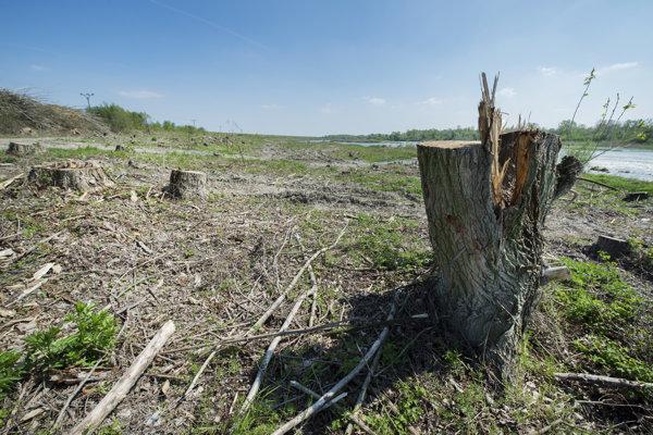 Aktivisti upozorňujú na čerstvý výrub brehových porastov Dunaja.