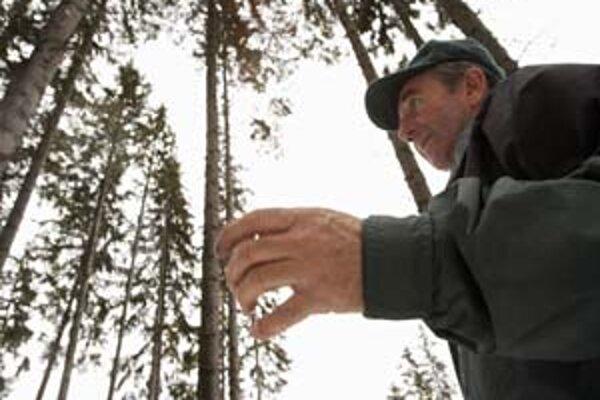 Lesník v lese pri Podbanskom.