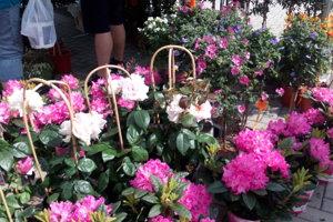 V Sološnici sa uskutočnil Kvetinový jarmok.