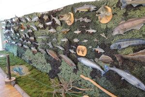 Exponáty na výstave Petrov zdar! O rybách a rybároch! v celoslovenskom poľovníckom múzeu vo Svätom Antone.