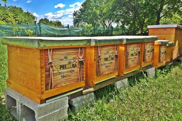 Úle, v ktorých správca rýchlostnej cesty R1 chová včely.
