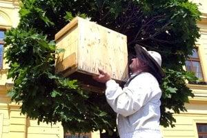 Roj premiestnil v roku 2004 do úľa  bývalý primátor Stanislav Mika, zanietený včelár.