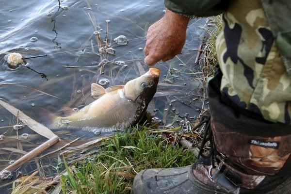 Lov rýb.