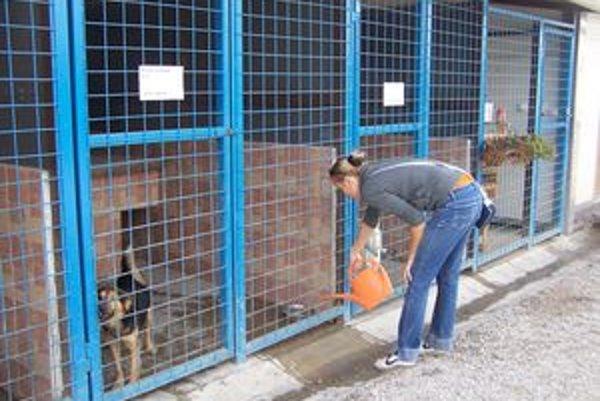 Žilinský psí útulok je domovom nielen opustených, ale aj týraných psov.