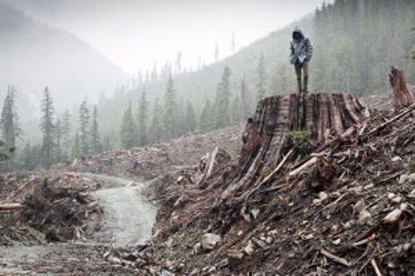 Z filmu Keď sa rúbe les.
