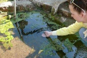 Niekto v termálnom prameni v Kamennej Porube pred rokom vysadil akváriové rybky. Na prekvapenie sa im tu darí.