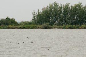 Senianske rybníky.