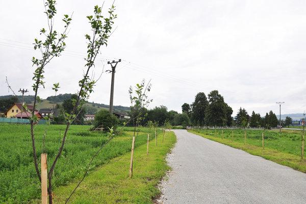 Slivky lemujú cestu na cintorín.