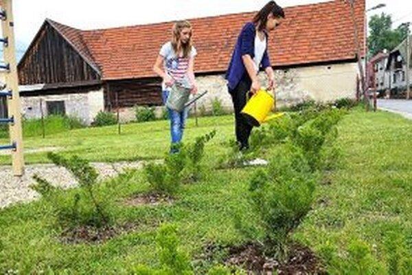 O nasadené stromy a kríky sa starajú žiaci základnej školy.