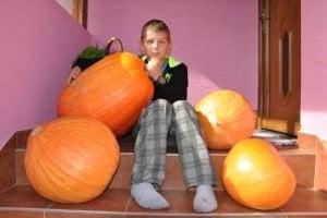 Šťastný pestovateľ využije tekvice na Halloween.