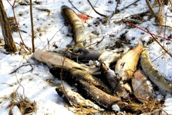 Ryby pripravila o život zima.