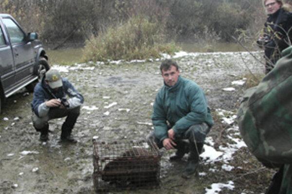 Ranené zviera odchytia ochranári do klietky, v ktorej ho prevážajú do chovnej stanice.