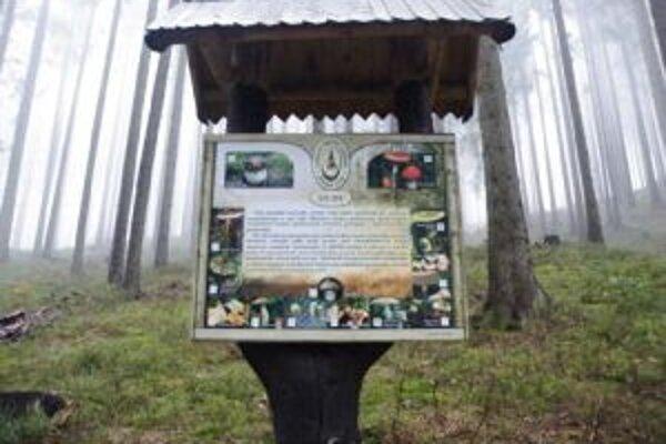 Les potrebuje vodu, voda les a človek oboje. Fotografie z Lesníckeho náučného chodníka.