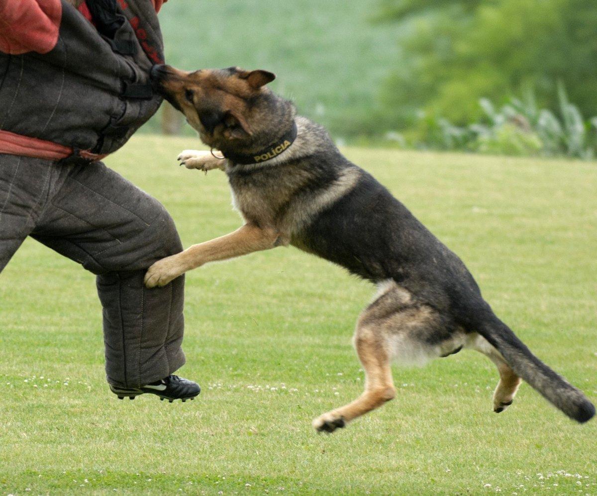 Policajný kynológ radí  Čo robiť pri útoku psa  - mytrnava.sme.sk d829f907fc3