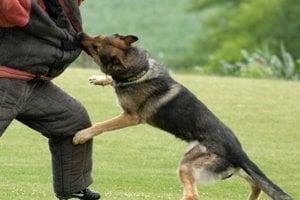 Policajný kynológ radí: Čo robiť pri útoku psa
