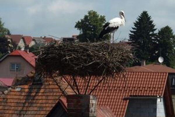 Zabudnutý bocian na streche budovy v centre Tvrdošína.