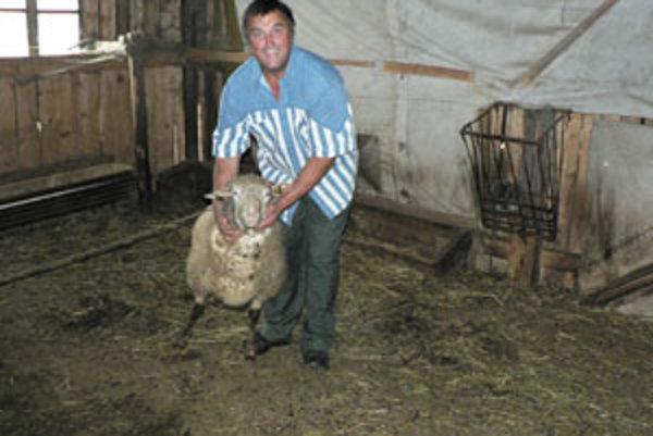 Milan Gombala dlhé roky pracoval na družstve v živočíšnej výrobe, no zo všetkých zvierat mu najviac k srdcu prirástli ovečky. Preto sa celý život točí najmä okolo nich.