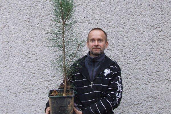 """Miloslav Lisý a  Pinus Coultery . Stromom sa darí aj napriek našemu """"chladnému"""" podnebiu."""