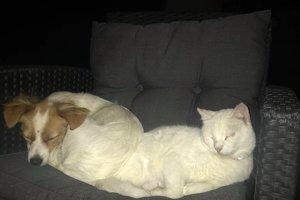 Každá adopcia dievčatá teší, no päťdesiat mačiek stále na svoj domov čaká.