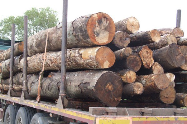 Jozef Kotleba nadobudol podozrenie pri obhliadke mesta, že v kogeneračnej jednotke sa spaľuje aj kvalitné drevo .