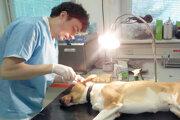 UVLF chce, aby dostali veterinári vakcínu skôr.