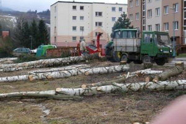 V Turanoch - na Ulici generála Fraňa vypílili vysoké brezy.