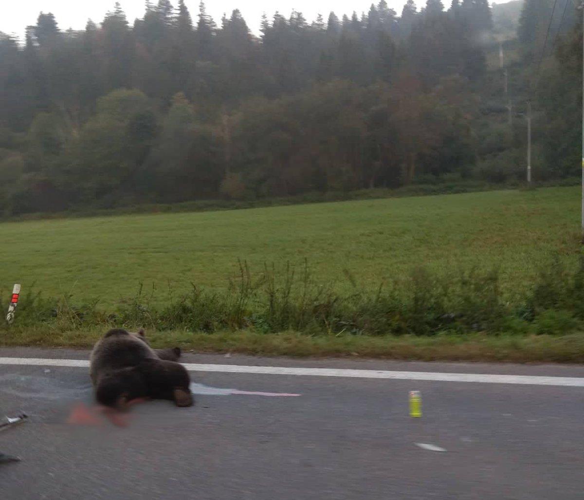 Zrážku s medveďom Ružomberčan neprežil - myliptov.sme.sk 629890a4b8a