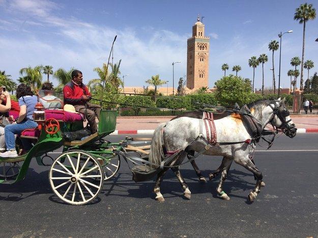 Veľmi populárne sú okružné jazdy konským kočom.