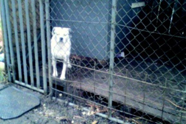 Klietka u veterinára. Pri hľadaní psov v Turčianskych Tepliciach pomáha webová stránka.