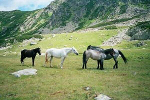 V doline Stanisoara sa preháňajú polodivé kone.