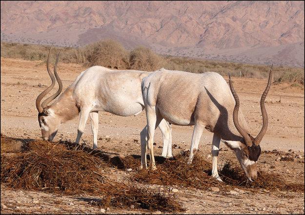Zvieratá v rezervácii Hai-Bar