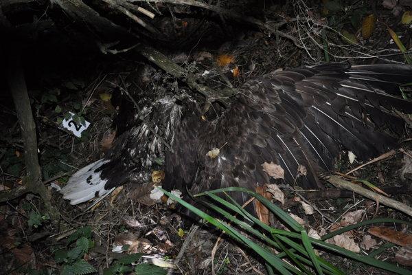 V obci Neded boli nájdené tri uhynuté dravce.