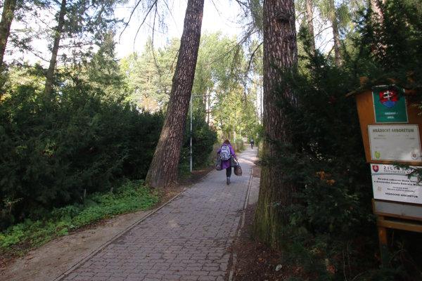 Cez arborétum vedie frekventovaný chodník.