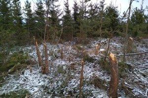 Zničený les v chránenom obvode Tatranské Matliare.