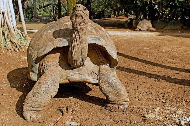 Atrakciou Vanille Réserve des Mascareignes sú obrovské korytnačky.