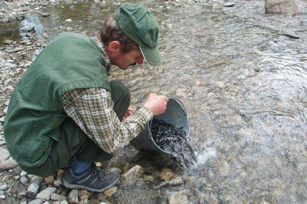 Dôvodom pravidelného zarybňovania horských bystrín je aj z roka na rok narastajúci počet vydier, bocianov a  volaviek v území oboch národných parkov, pre ktoré sú ryby súčasťou ich potravy.