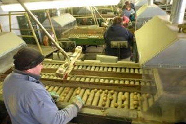 Poľnohospodári očakávali väčšiu úrodu zemiakov. Pre horúce leto zemiaky nedorástli.