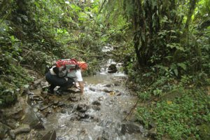 Hľadanie žiab v rieke. Vedci to chceli vzdať.