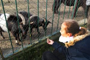 V žiarskom parku nájdu návštevníci aj malú mestskú zoo.