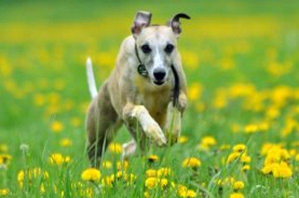 Z nepokosenej trávy sa majiteľom psov zle odstraňujú psie výkaly. Ak sa im to aj podarí, často ich nemajú kde vyhodiť, pretože nie všade sú nádoby na exkrementy. Poslankyňa Edita Havránková sa spýtala, či sú majitelia psov občania druhej kategórie.