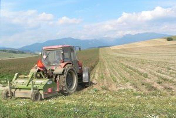 Vyorávku zemiakov urobili v termíne aj na jednej z parciel so zemiakmi Poľnohospodárskeho družstva Smrečany za Ondrašovou.