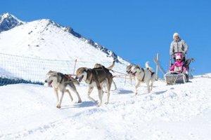 Akcia Snežné psy.