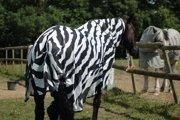 Kôň s plachtou so zebrím vzorom.