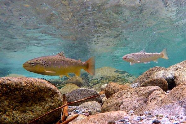 Filmári prinášajú ukážku zo života divokej rieky.