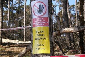 V lese vyrúbali takmer sedemdesiat stromov a kríky.