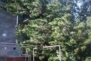 Silný vietor úradoval v Nízkych Tatrách aj podhorských oblastiach Liptova
