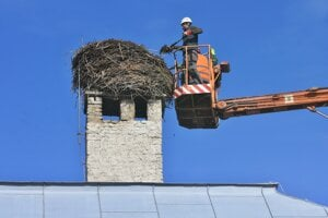 Bociany začali toto hniezdo stavať v roku 1950.