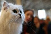 Mačky vedia rozpoznať, keď človek vysloví ich meno.