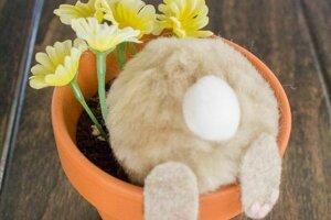 Zvedavý zajačik