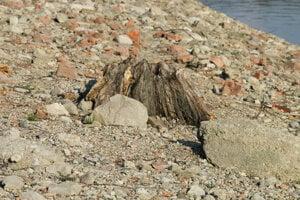 Vyťaté kmene stromov zakonzervovala voda. Foto z apríla.